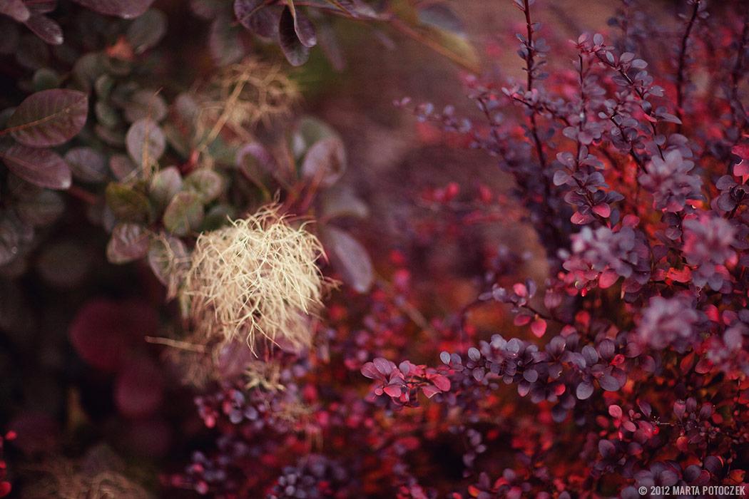 Autumn - garden