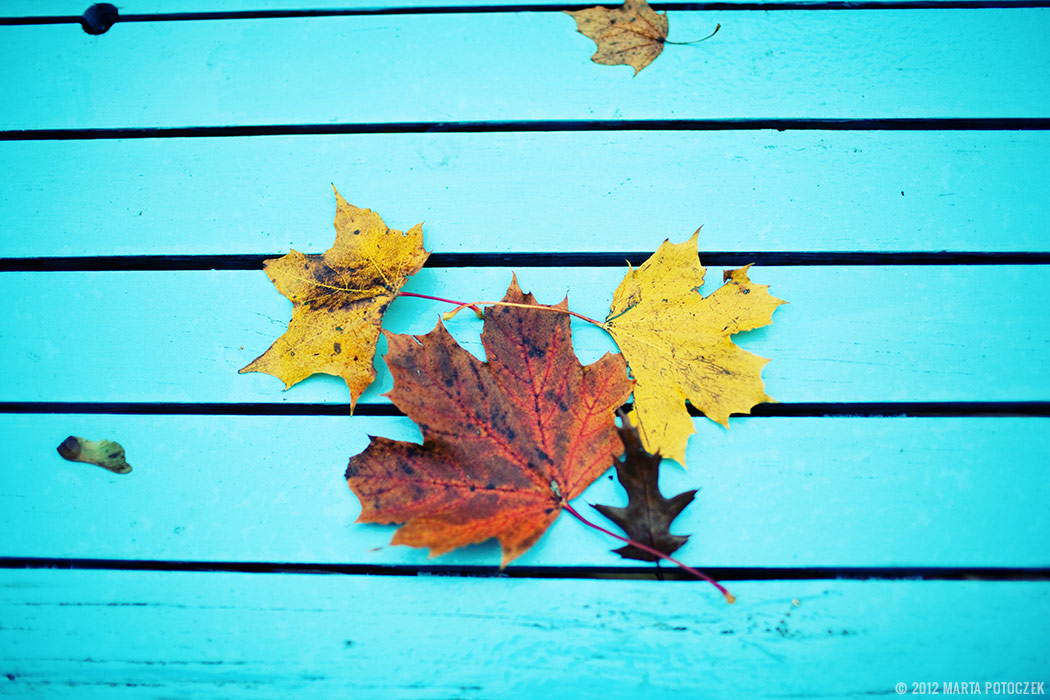 Autumn - leaf---2