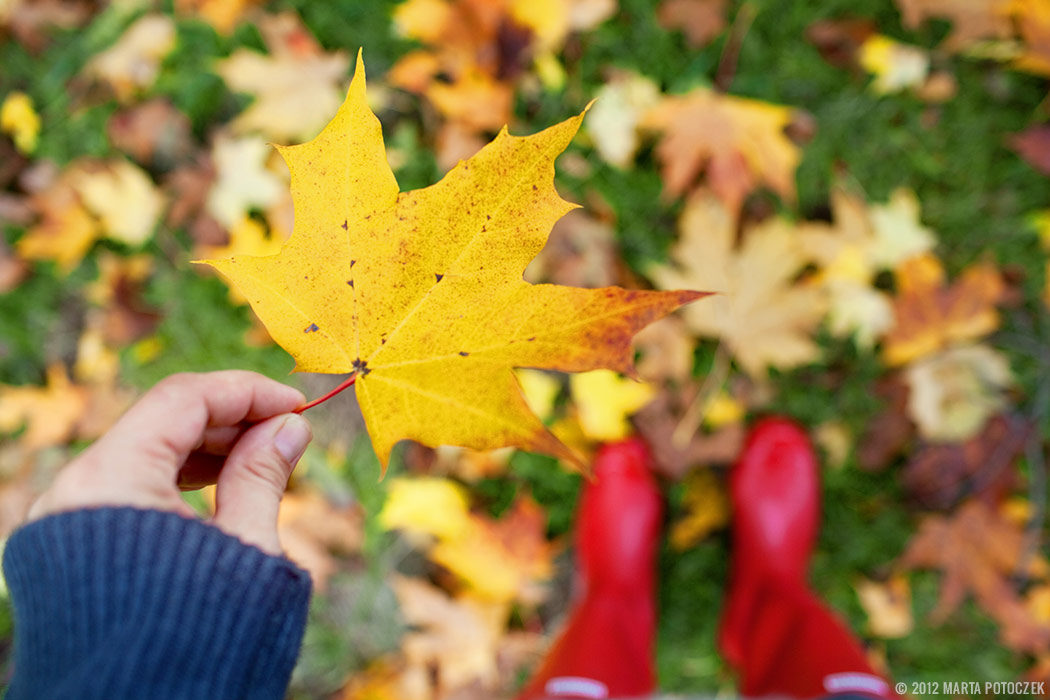 Autumn - leaf