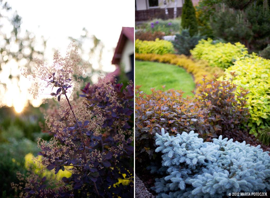 3_garden_intro