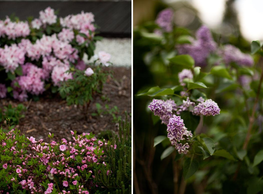 8-pink_color_garden