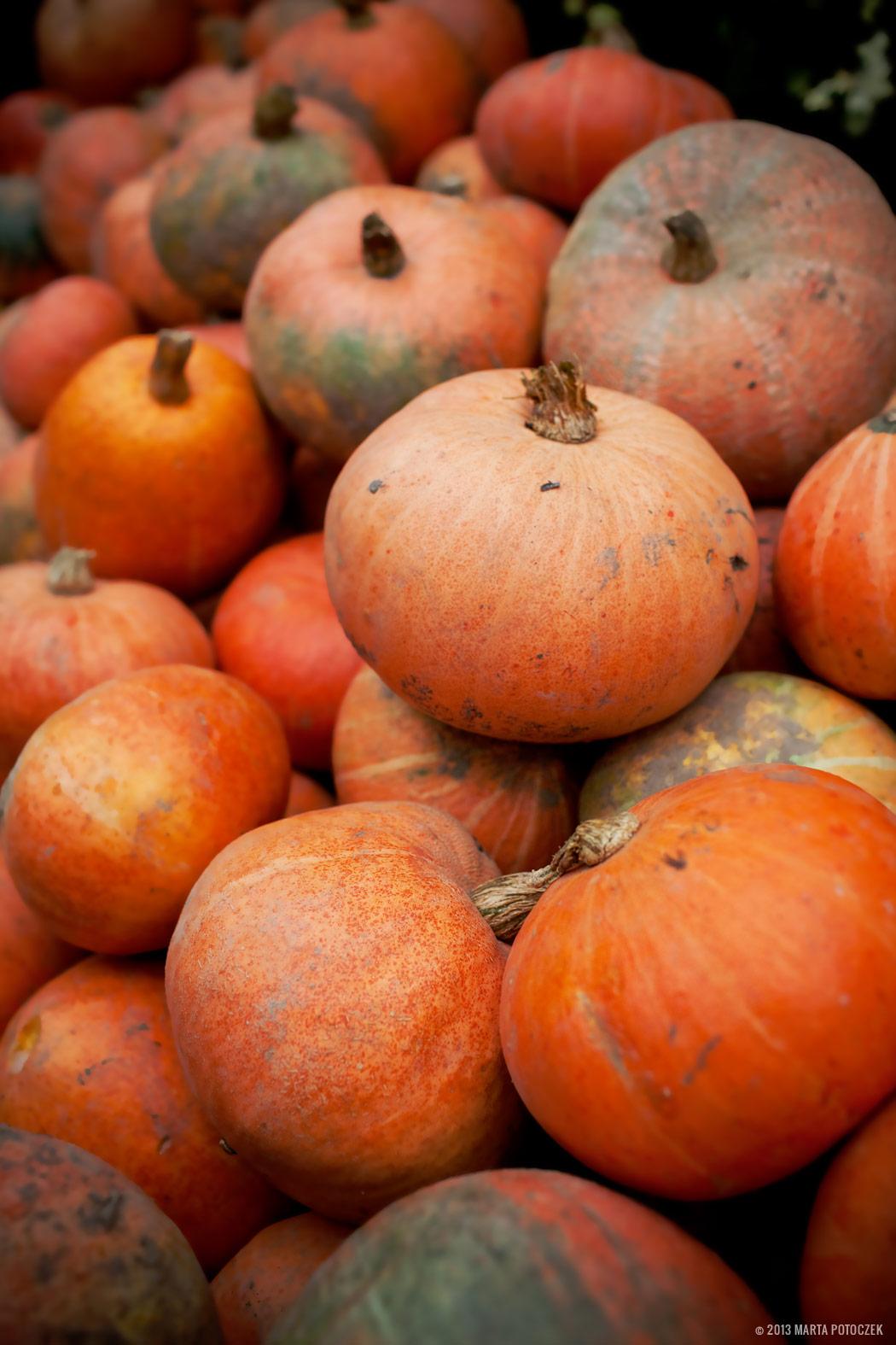 pumpkin_festival