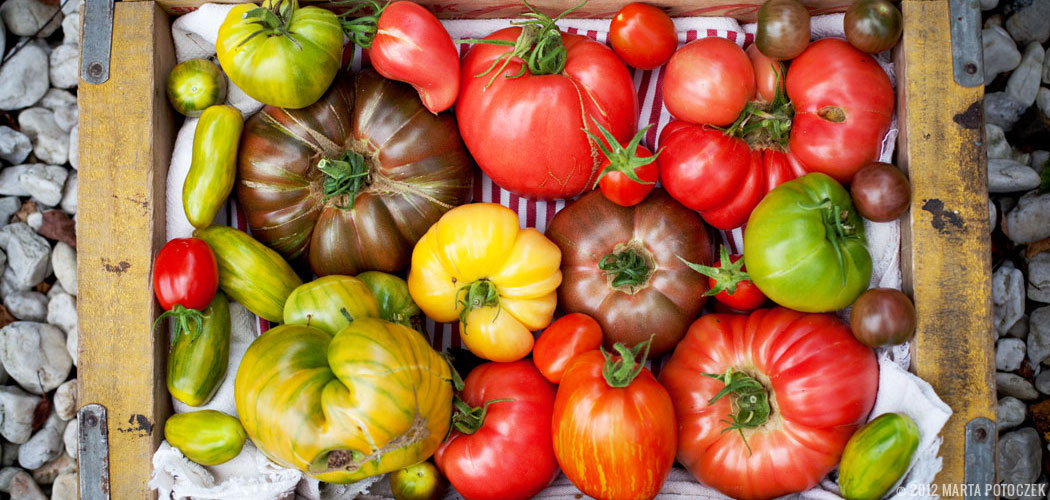 tomato_featured