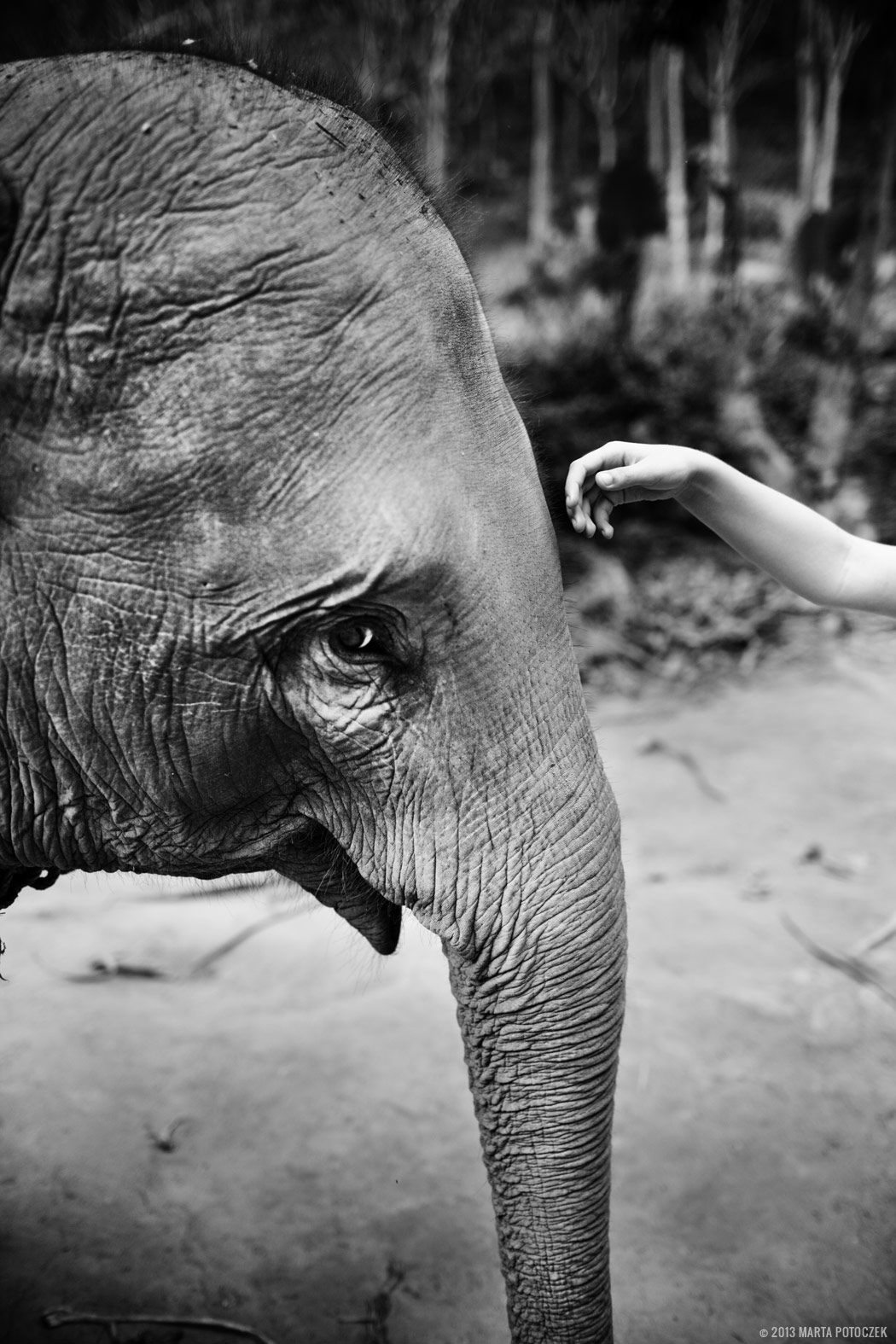 11_elephant