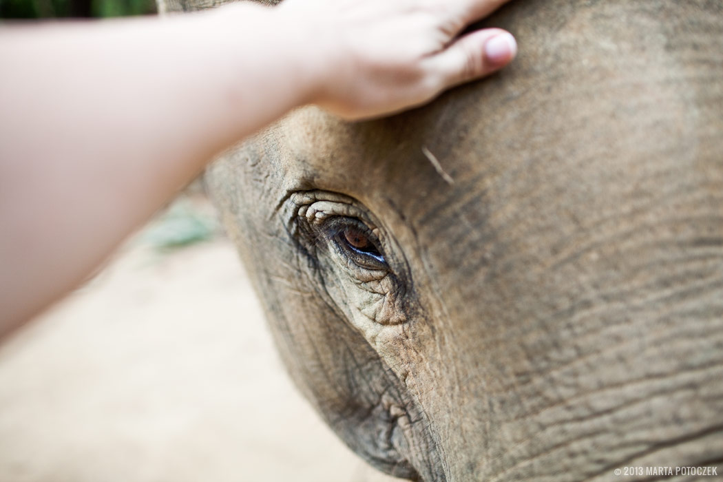 13_elephant