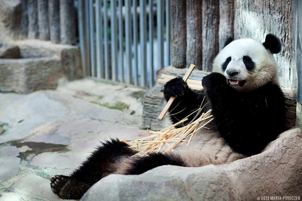 1-chiang_mai_zoo