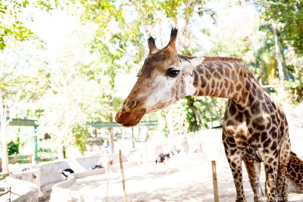 10-chiang_mai_zoo