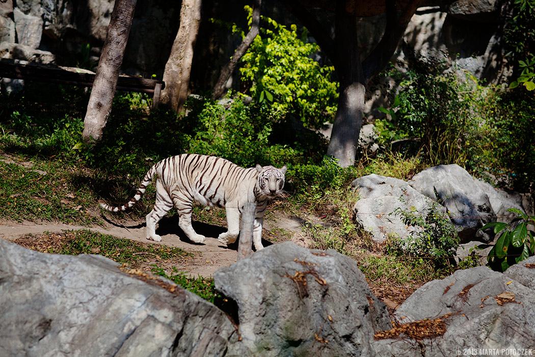 11-chiang_mai_zoo