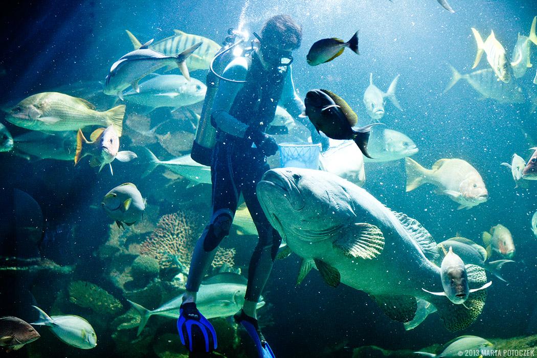 6-chiang_mai_zoo