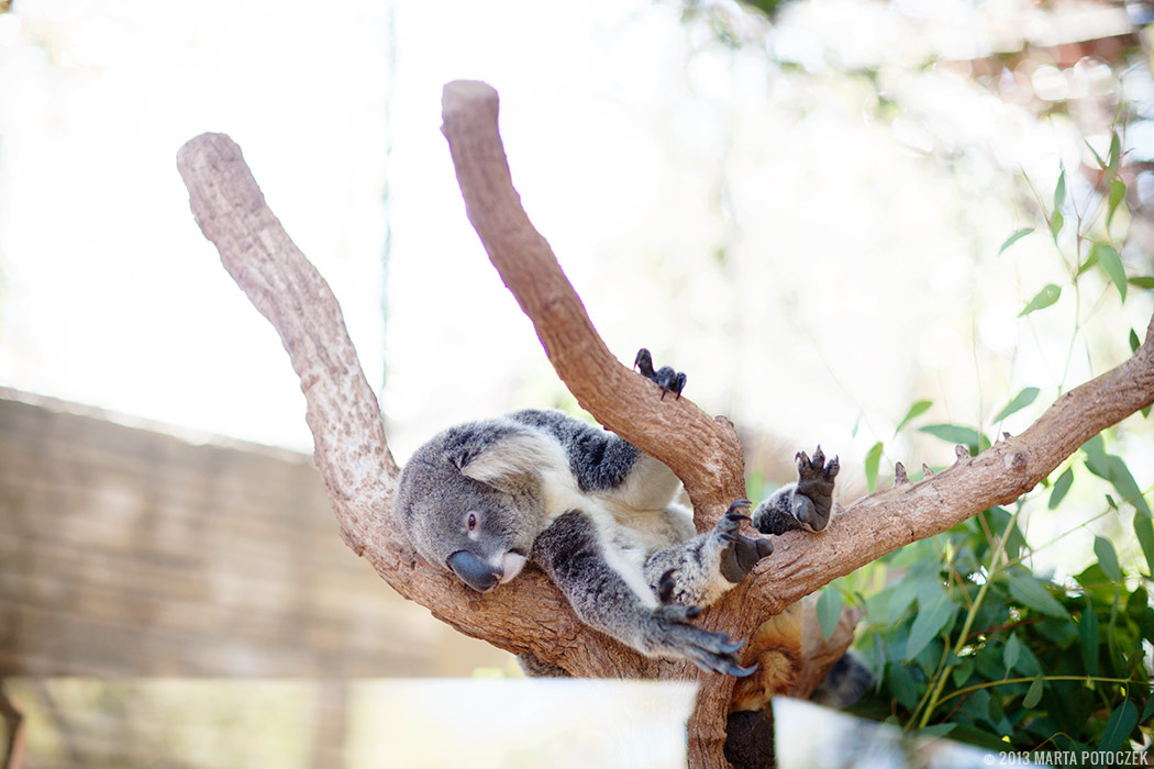 7-chiang_mai_zoo