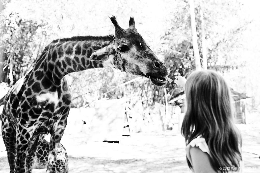 8-chiang_mai_zoo