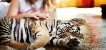 animals_chiang_mai_feat