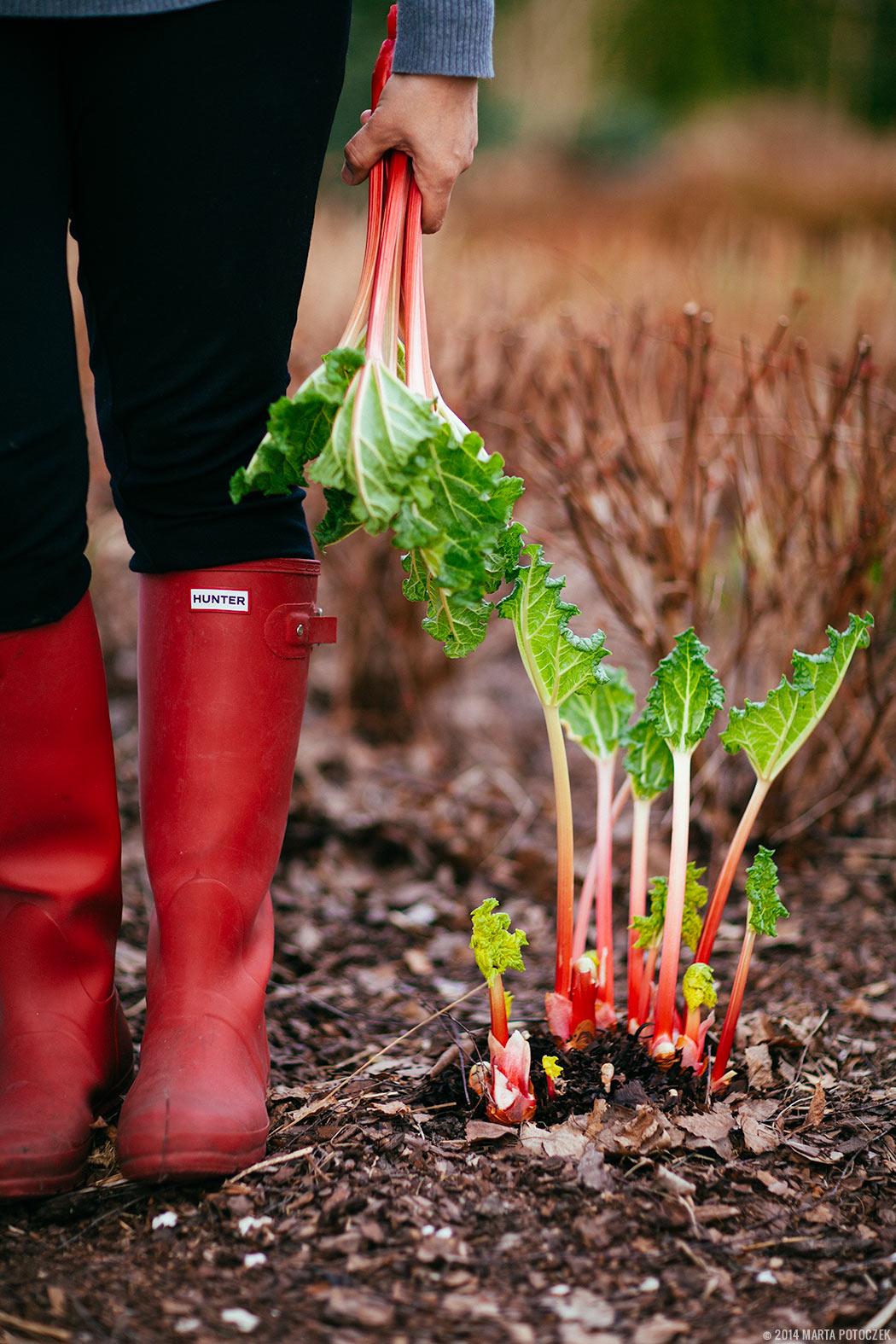 forced_rhubarb1