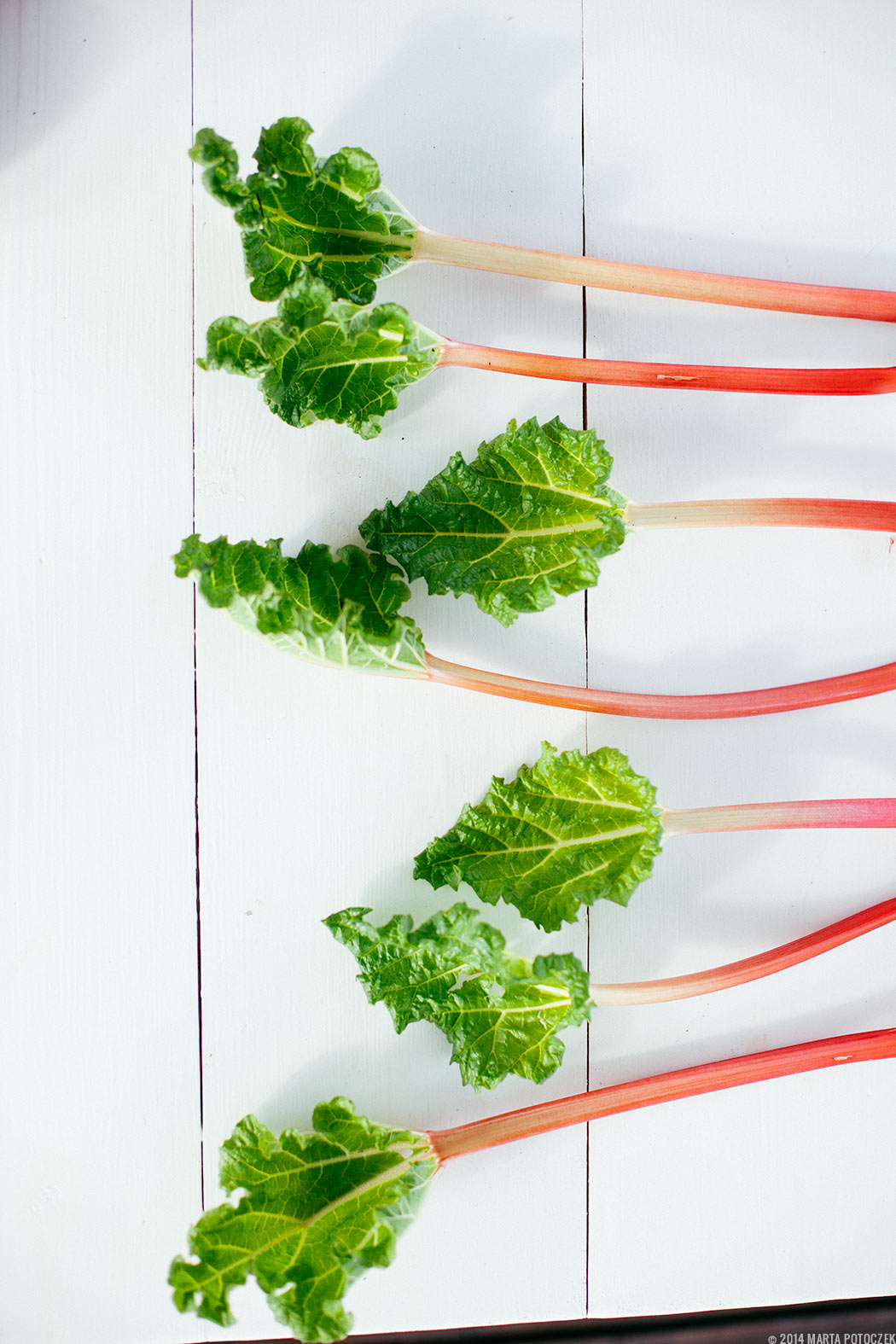 rhubarb_on_the_table