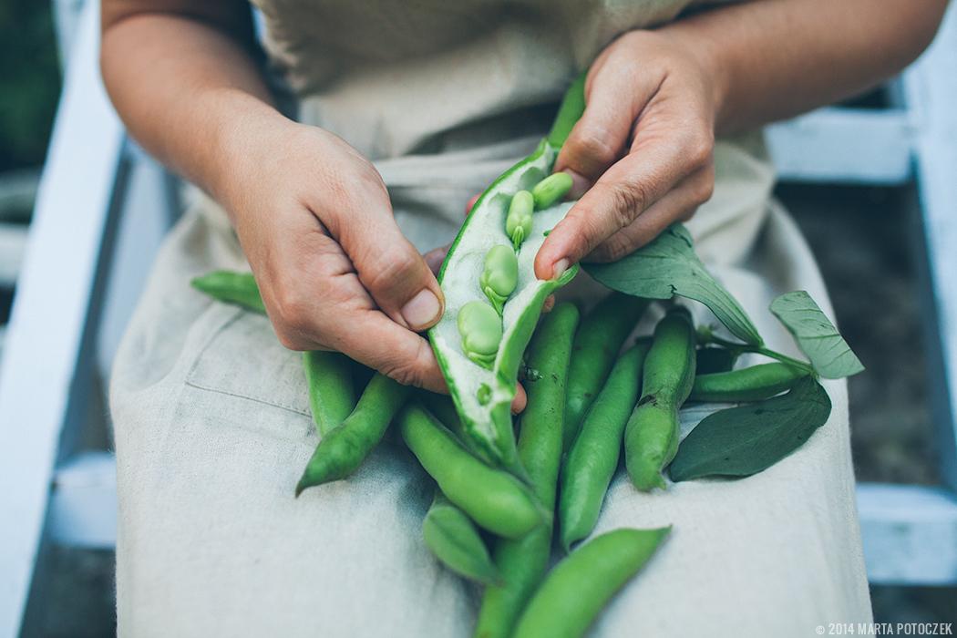 fava beans shelling3