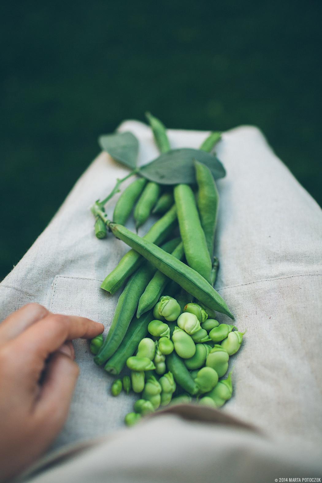 fava beans shelling4