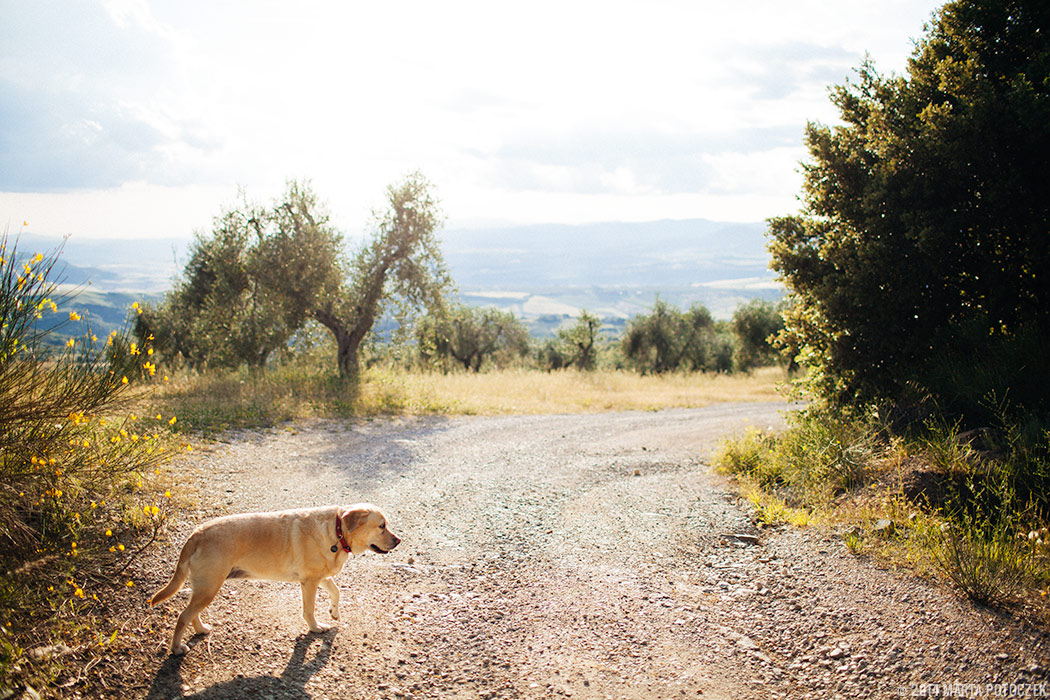 travelling_to_tuscany_with_dog