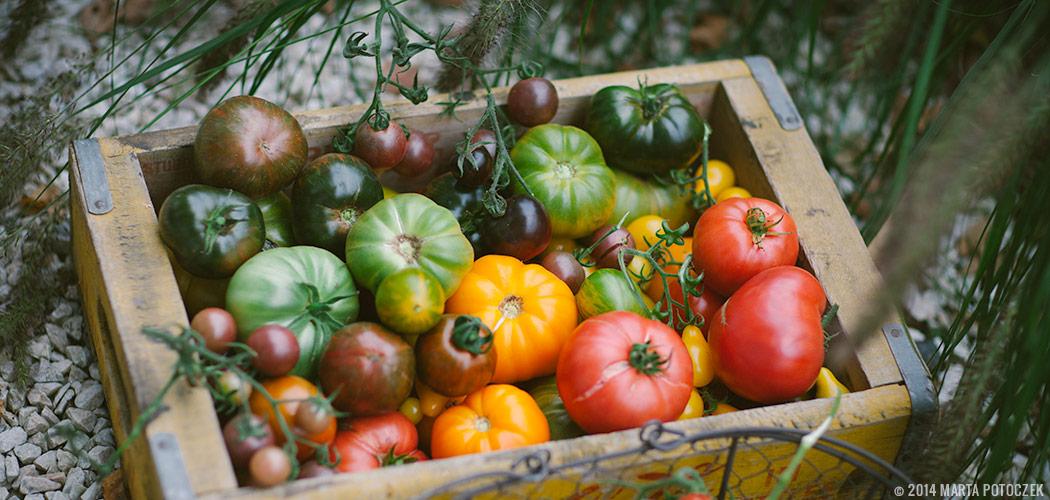tomato_feat