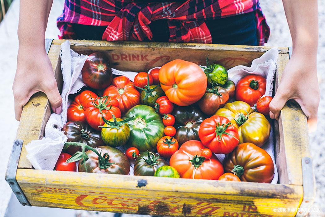 choroby_pomidorow