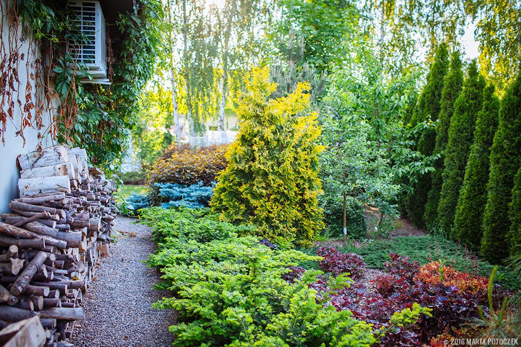 kolory w ogrodzie