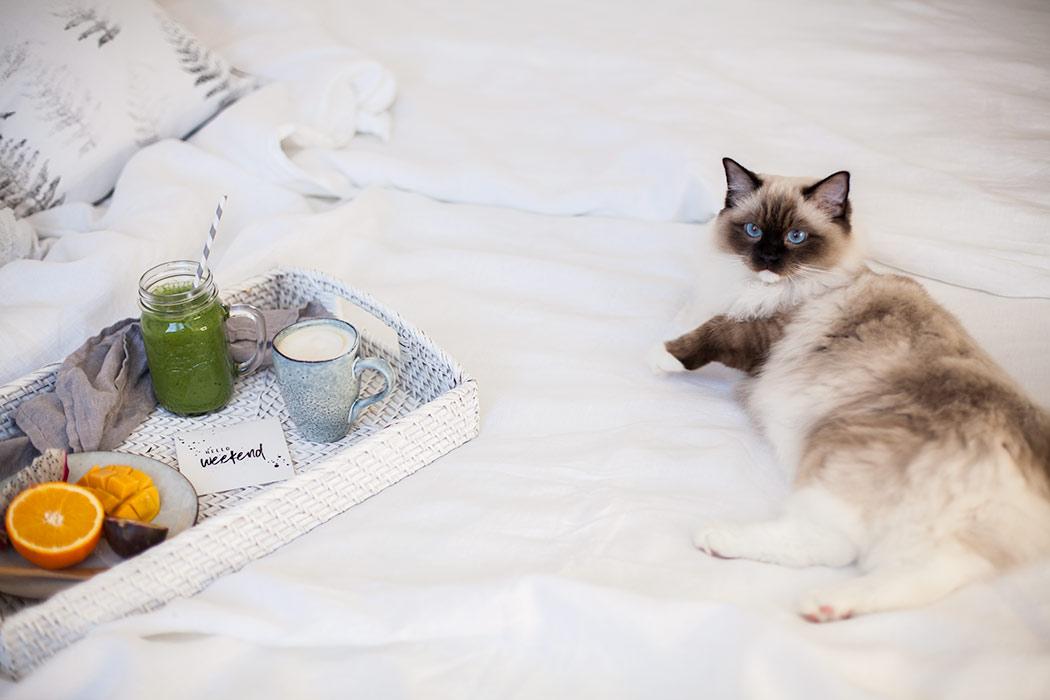 sniadanie-z-kotem