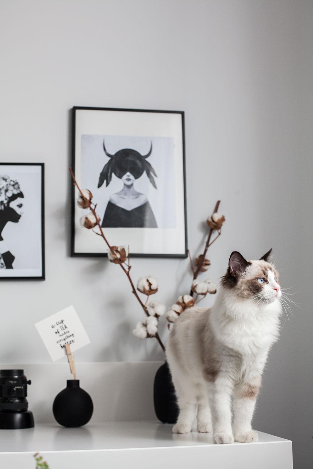 kot-w-biurze