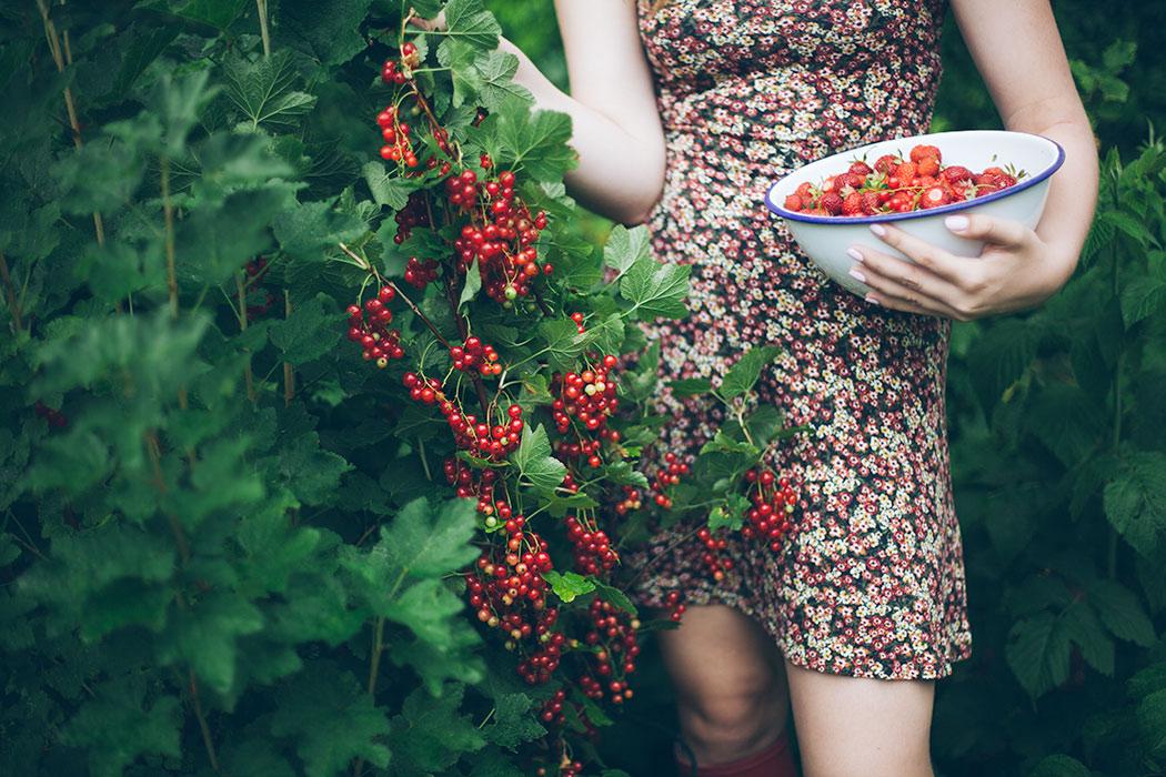 owoce-w-ogrodzie-truskawki-i-porzeczki
