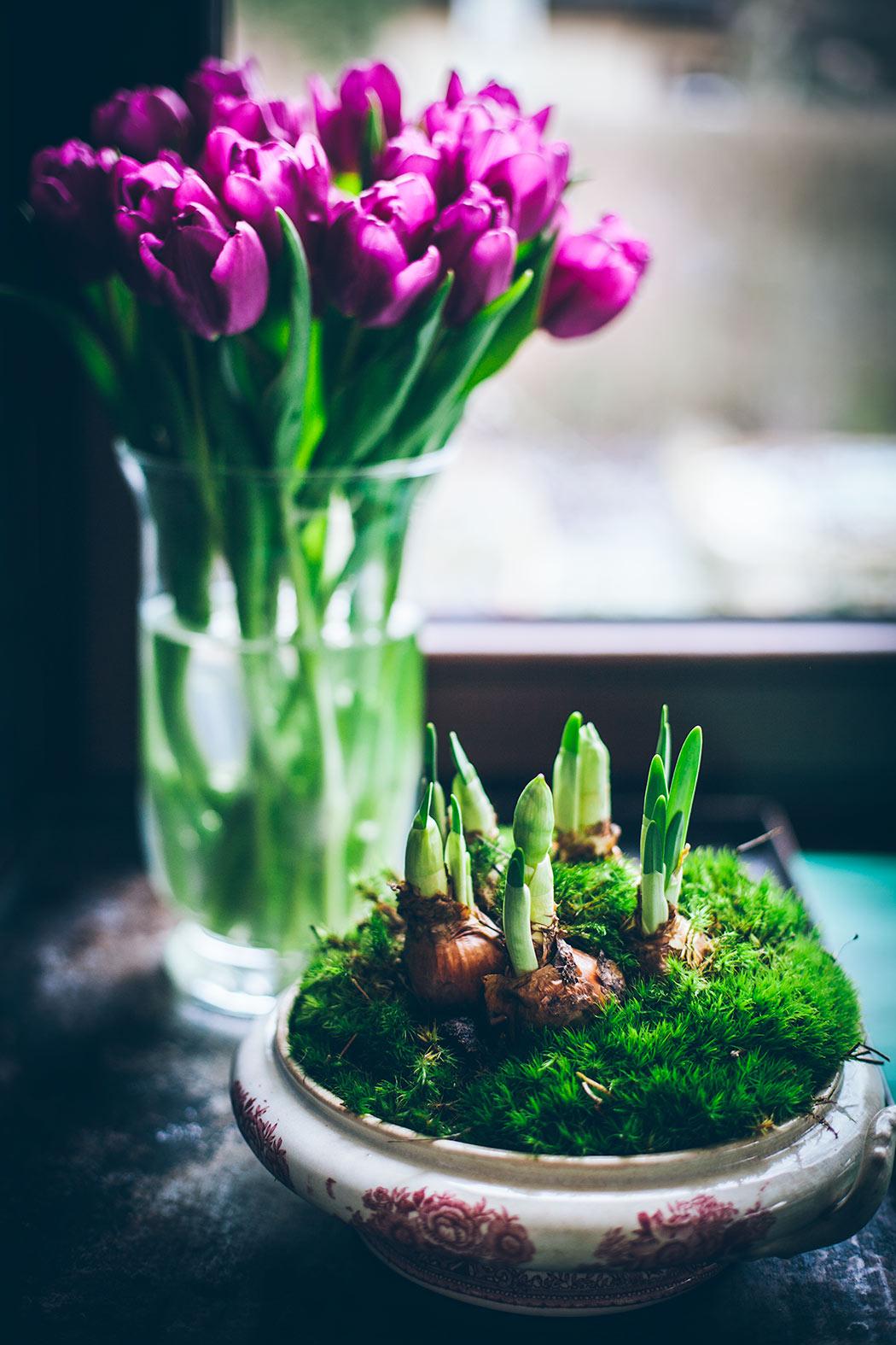 podpędzone kwiaty cebulowe w domu