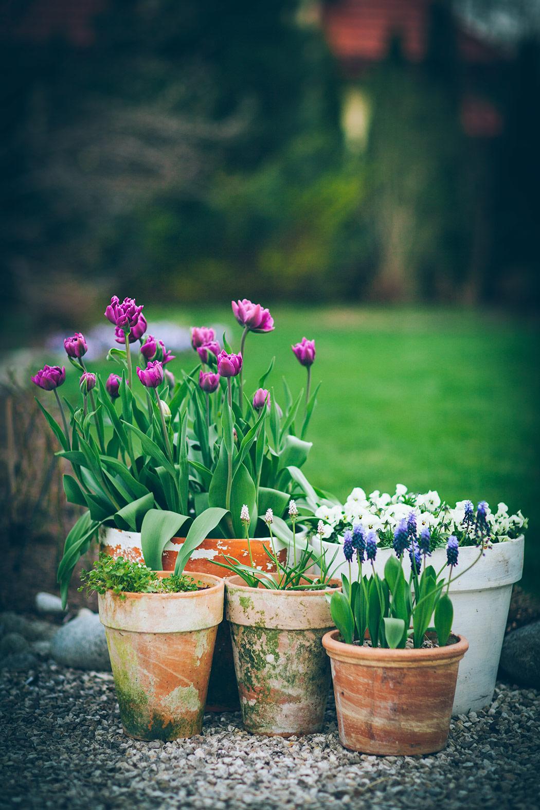 wczesna-wiosna