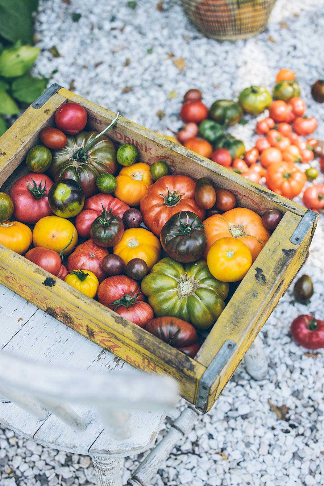 pikowanie, jak pikować pomidory