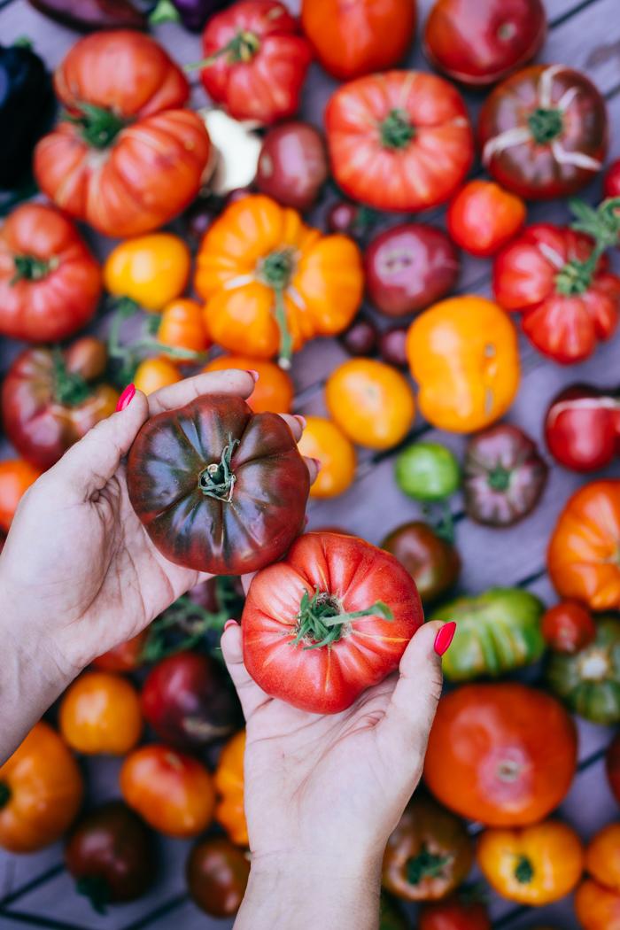 pomidory uprawa-3
