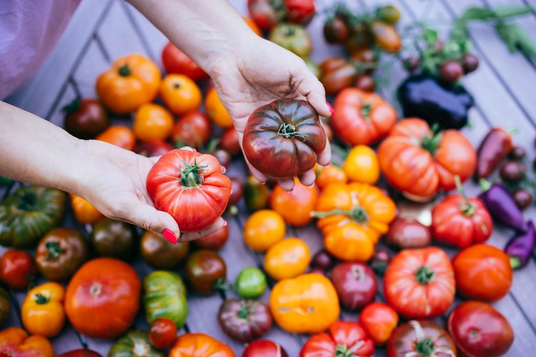 pomidory uprawa-4