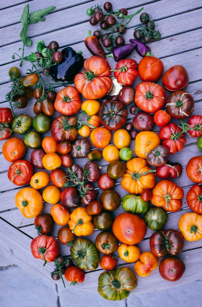 pomidory uprawa-8