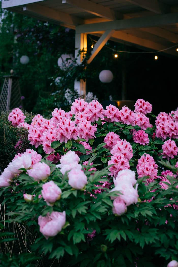 ogrod ogrody rok w ogrodzie-12