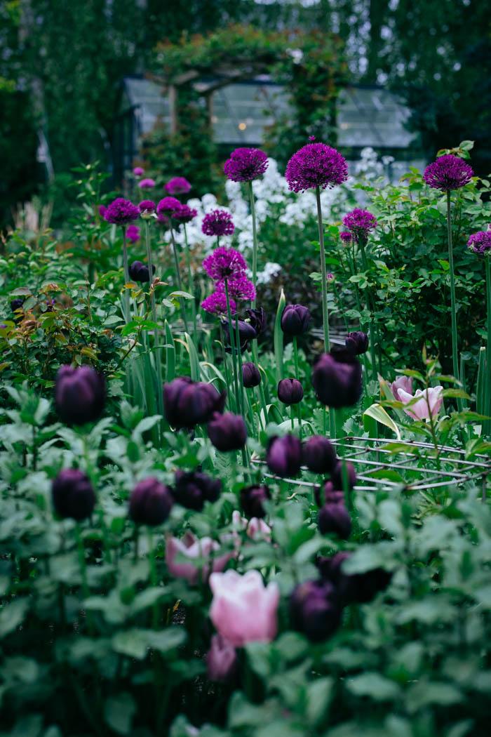 ogrod ogrody rok w ogrodzie-14