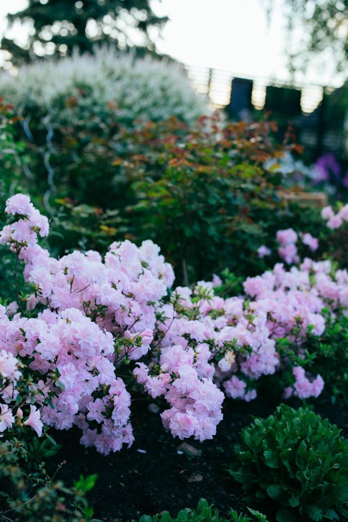 ogrod ogrody rok w ogrodzie-18