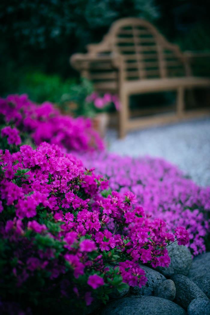 ogrod ogrody rok w ogrodzie-20