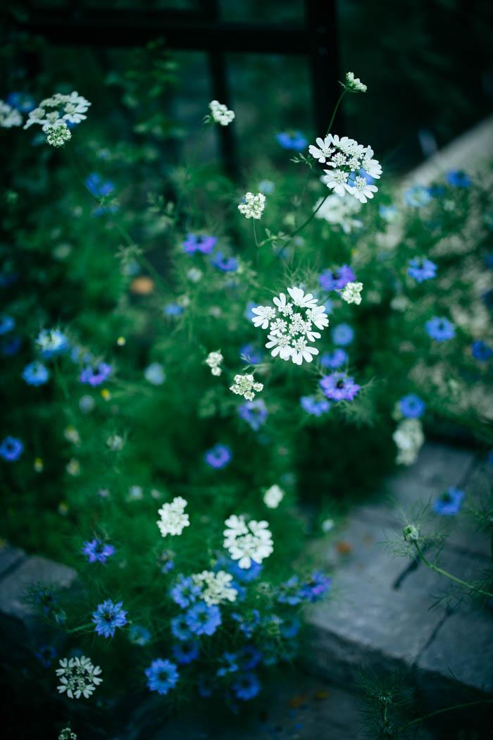 ogrod ogrody rok w ogrodzie-21