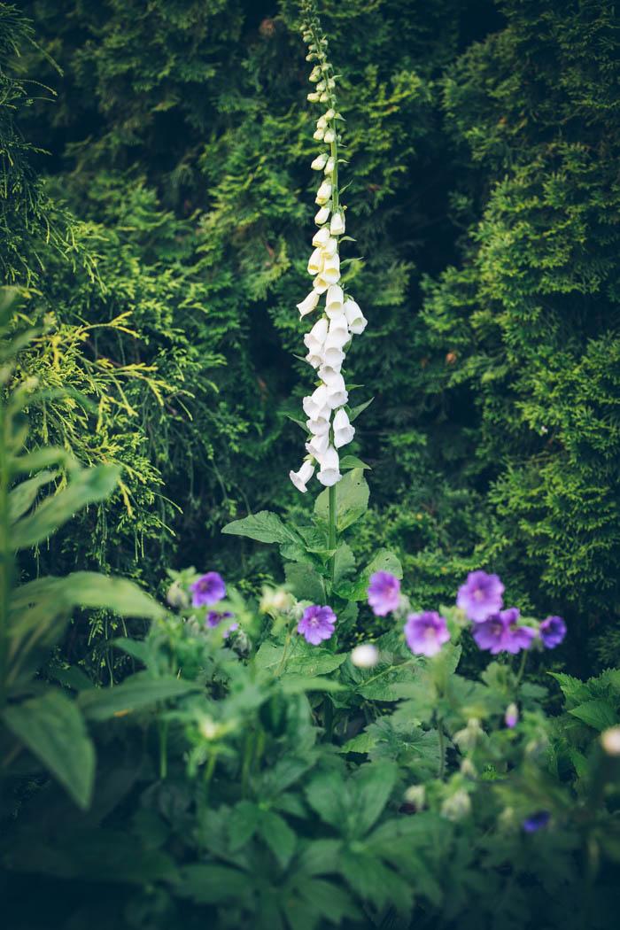 ogrod ogrody rok w ogrodzie-26