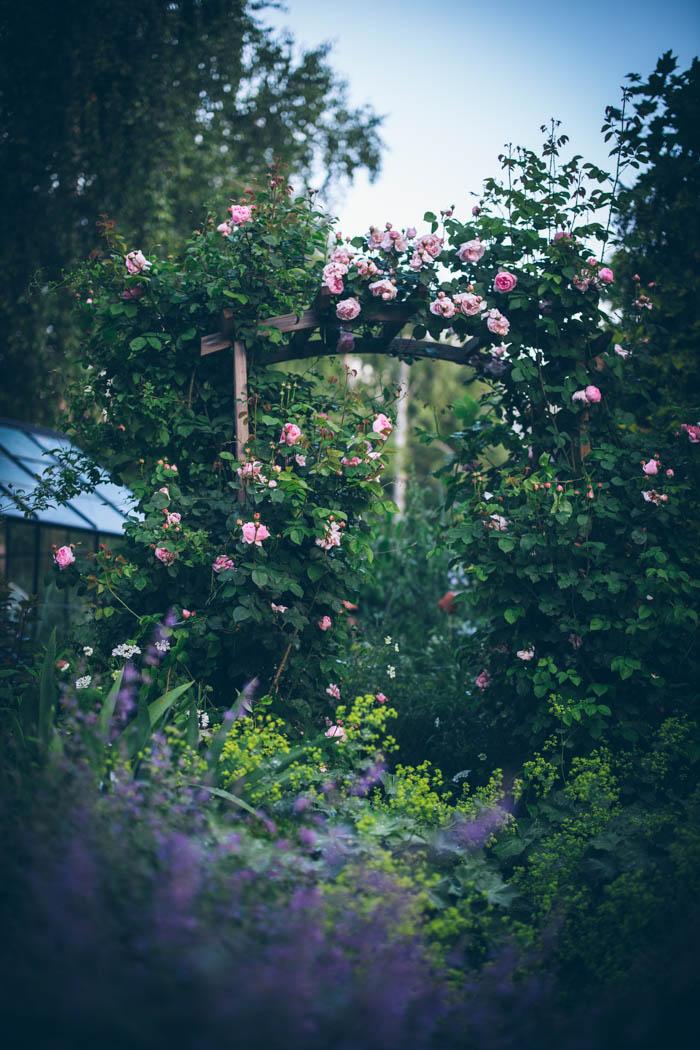 ogrod ogrody rok w ogrodzie-28