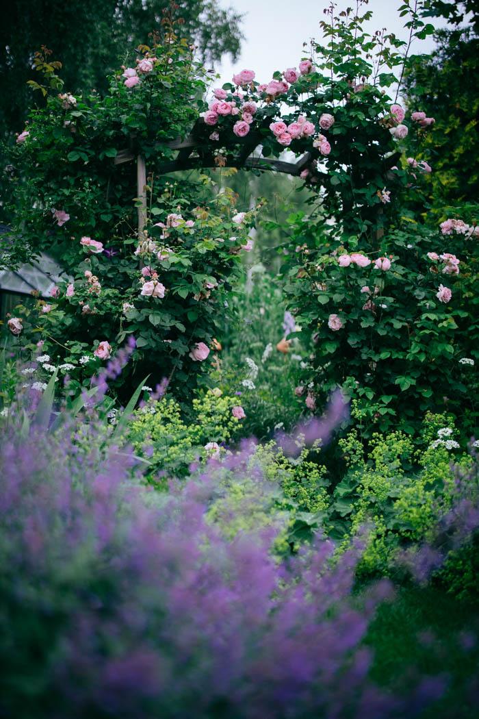 ogrod ogrody rok w ogrodzie-33