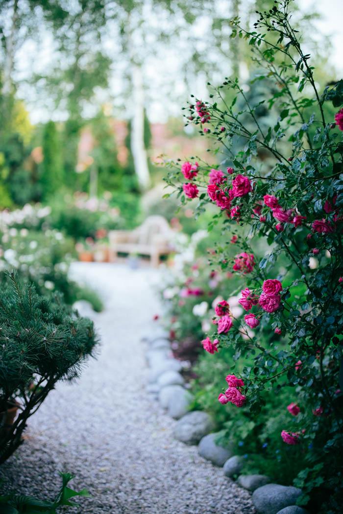ogrod ogrody rok w ogrodzie-35