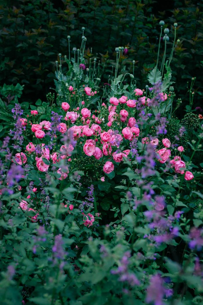 ogrod ogrody rok w ogrodzie-36