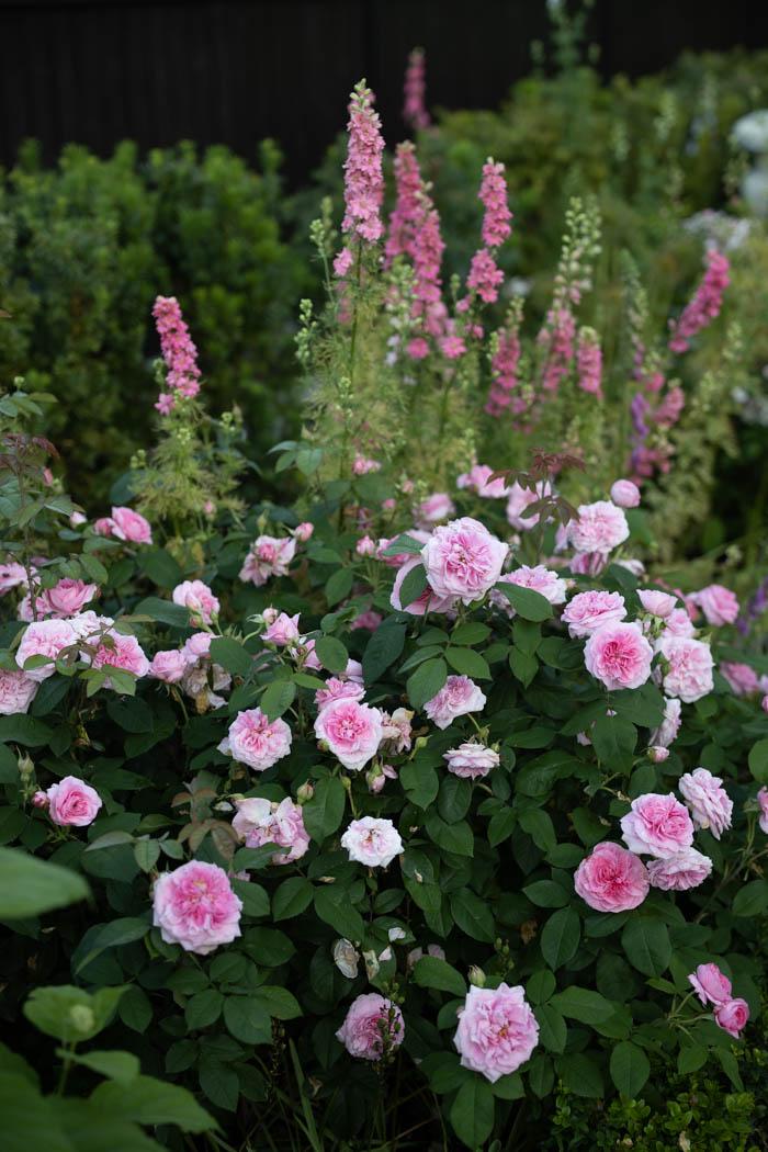 ogrod ogrody rok w ogrodzie-38