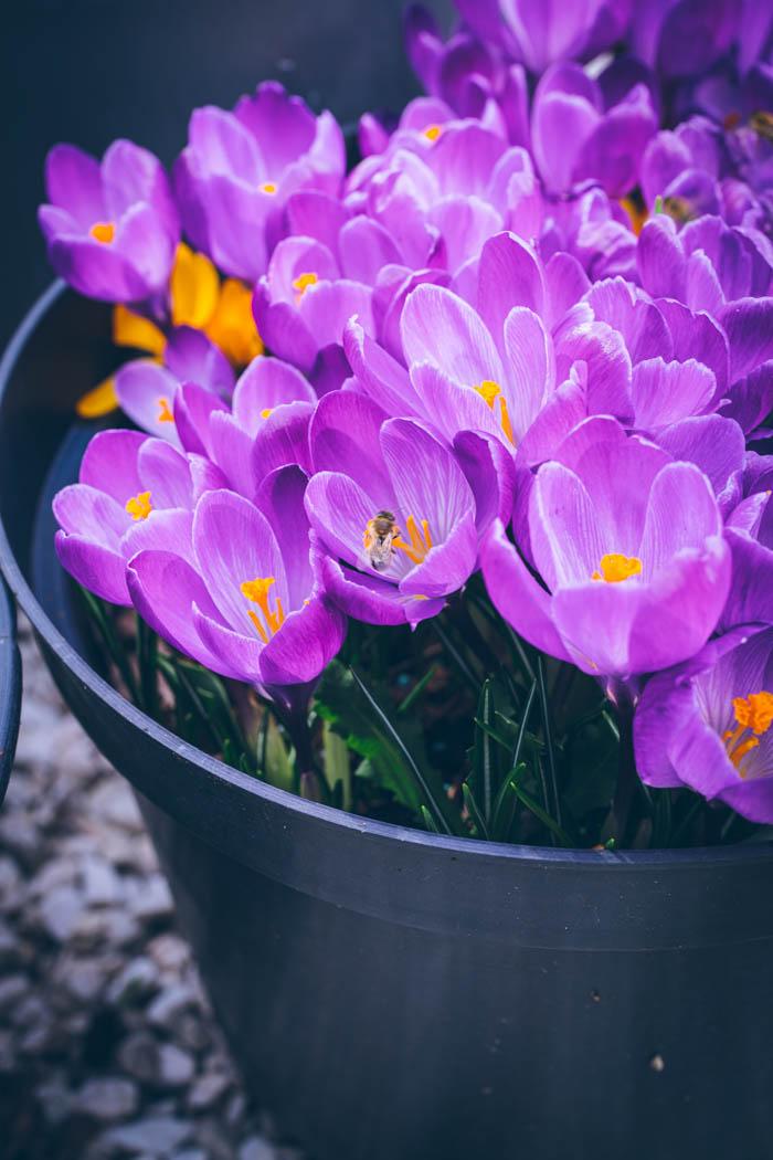 ogrod ogrody rok w ogrodzie-4