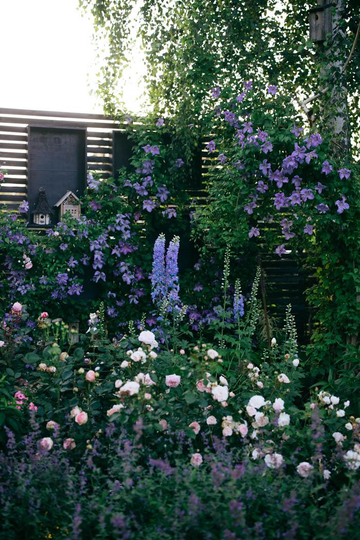 ogrod ogrody rok w ogrodzie-42