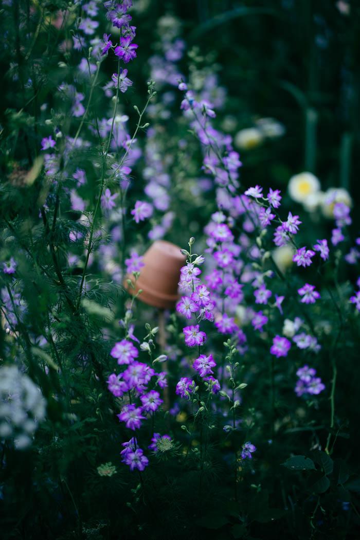 ogrod ogrody rok w ogrodzie-44