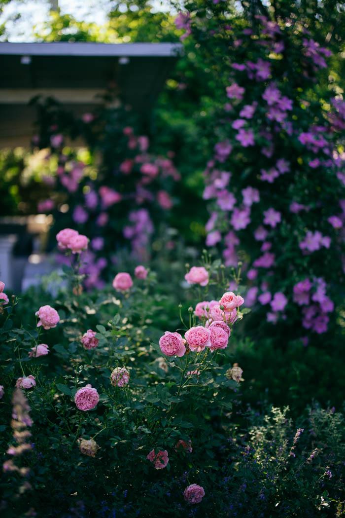 ogrod ogrody rok w ogrodzie-46