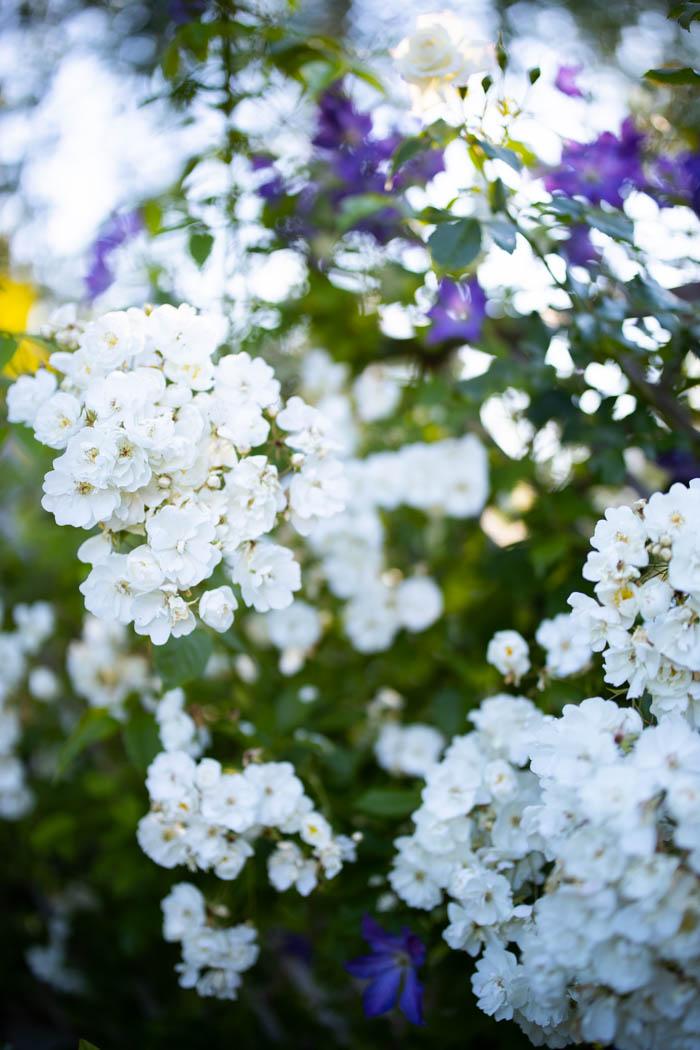 ogrod ogrody rok w ogrodzie-47