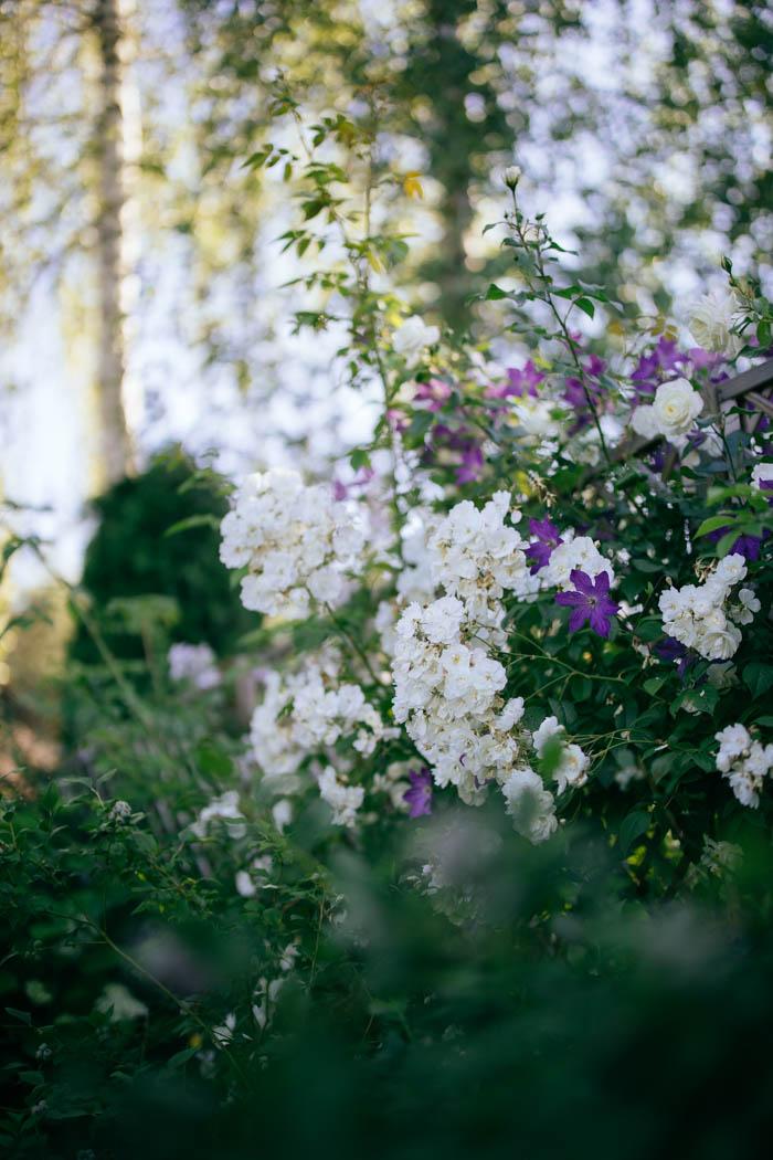 ogrod ogrody rok w ogrodzie-48